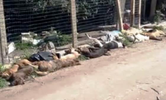 Cani avvelenati a Sciacca, l'Aidaa presenta una denuncia contro il sindaco Valenti