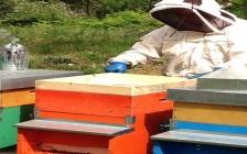 Un seminario apre nuovi scenari sul ruolo cruciale delle api nella tutela ambientale